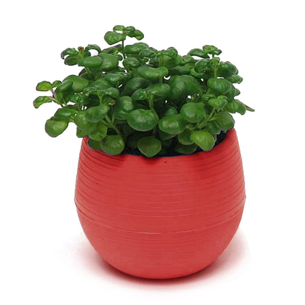 colourful round plastic plant flower pot home office garden decor planter 7cm ebay. Black Bedroom Furniture Sets. Home Design Ideas
