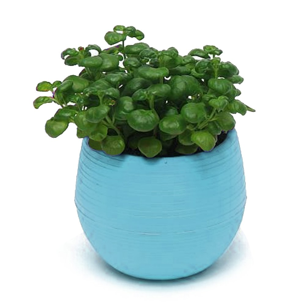 candy colourful mini slim round plastic plant flower pot. Black Bedroom Furniture Sets. Home Design Ideas