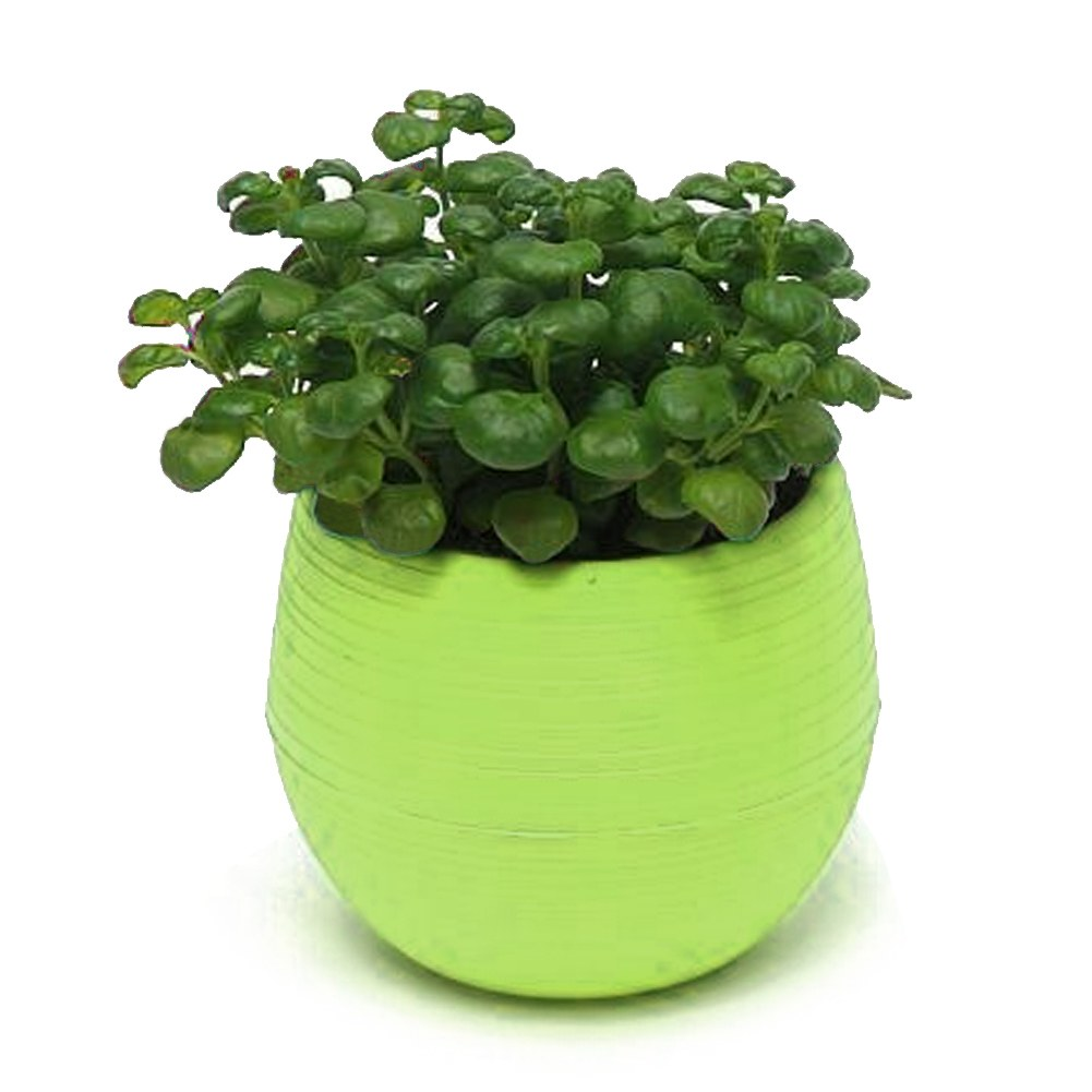 Colourful cute round plastic plant flower pot home office for Flower pots with plants